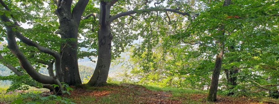 Rundum traufgängerisch - alter Baumbestand