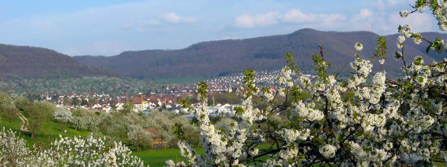 Rundum fruchtig - Blick auf Dettingen