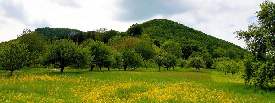Rundum fruchtig - Kirschenheimat
