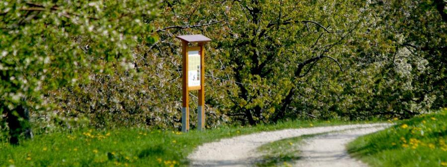 Rundum fruchtig - Kirschenweg